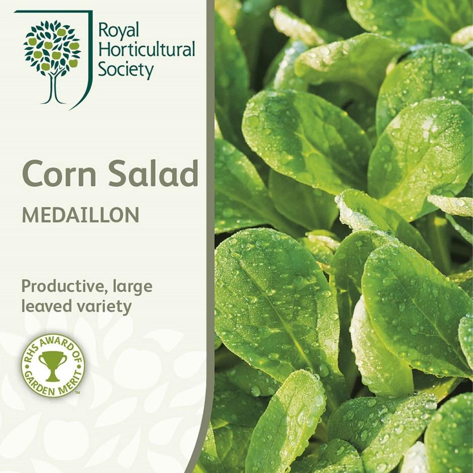 cornsalad / Valerianella locusta 'Medaillon'
