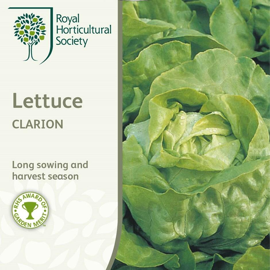 lettuce (butterhead) / Lactuca sativa' Clarion'