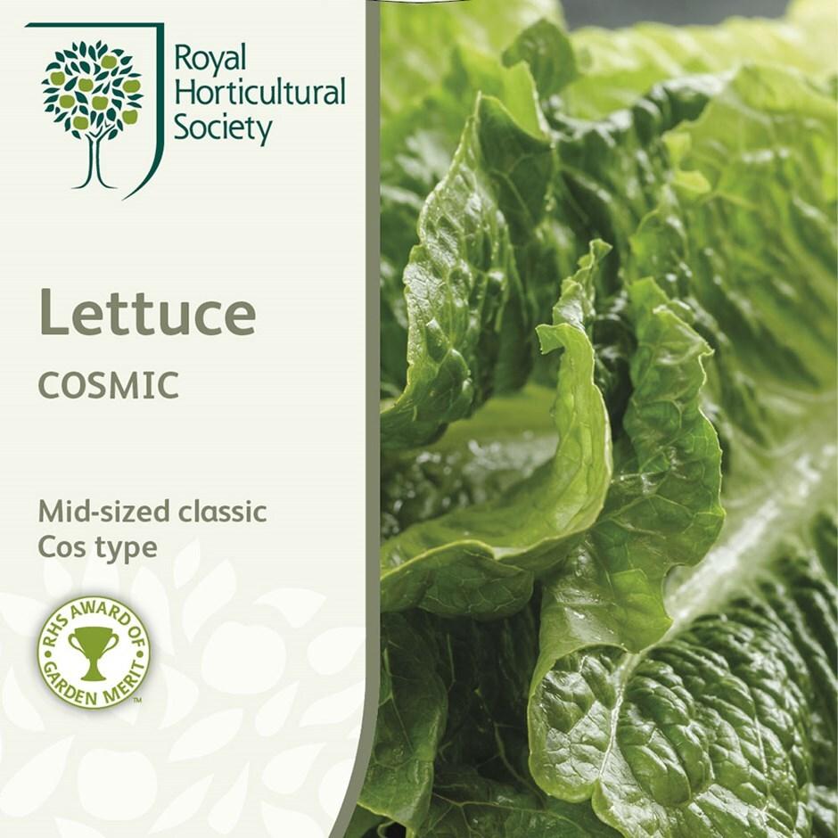 lettuce (cos)  / Lactuca sativa 'Cosmic'