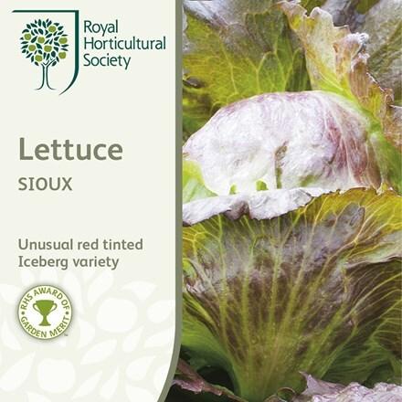 lettuce (crisphead) Sioux