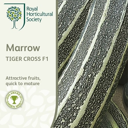 marrow Tiger Cross