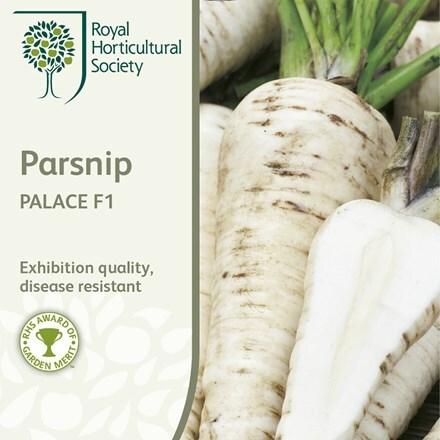 parsnip Palace