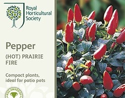 chilli pepper Prairie Fire