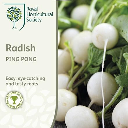 radish Ping Pong