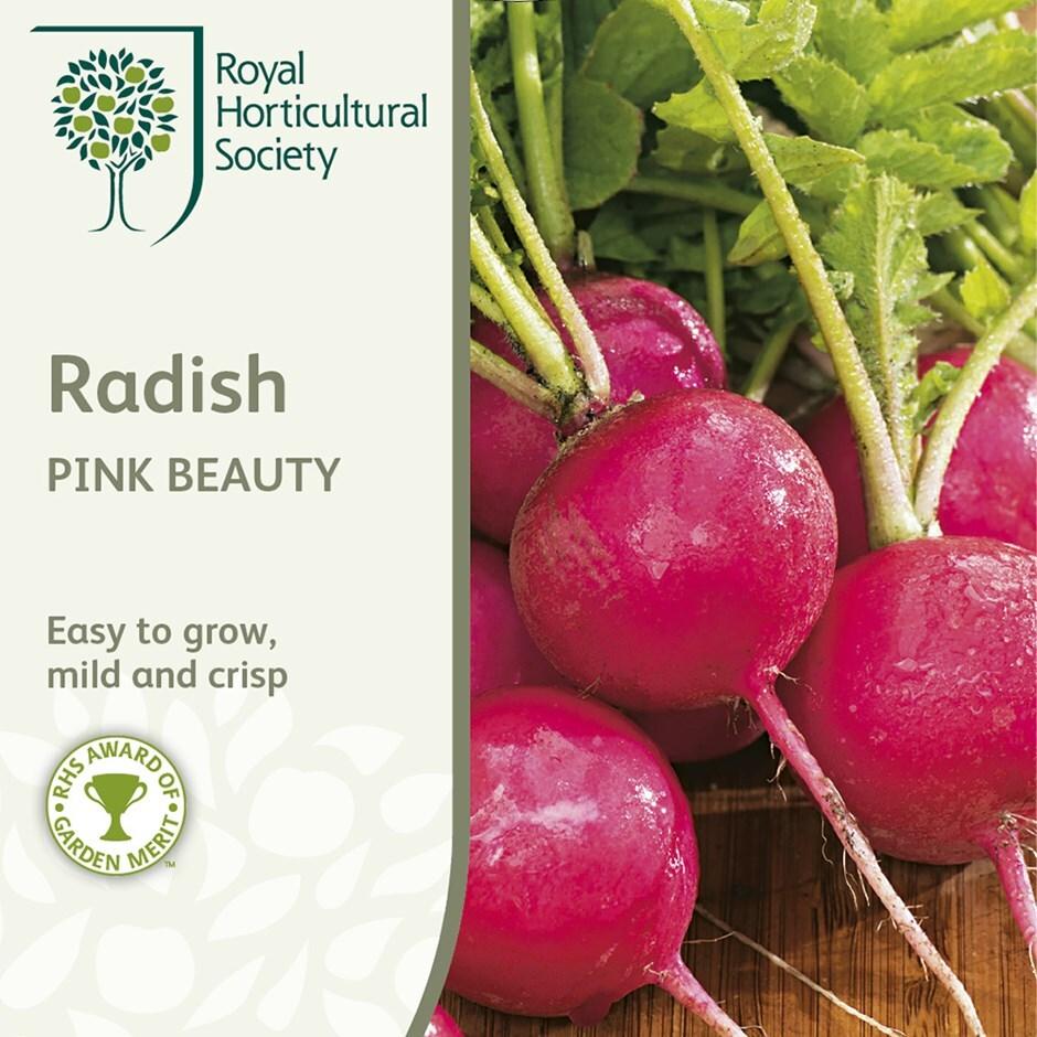 radish / Raphanus sativus 'Pink Beauty'