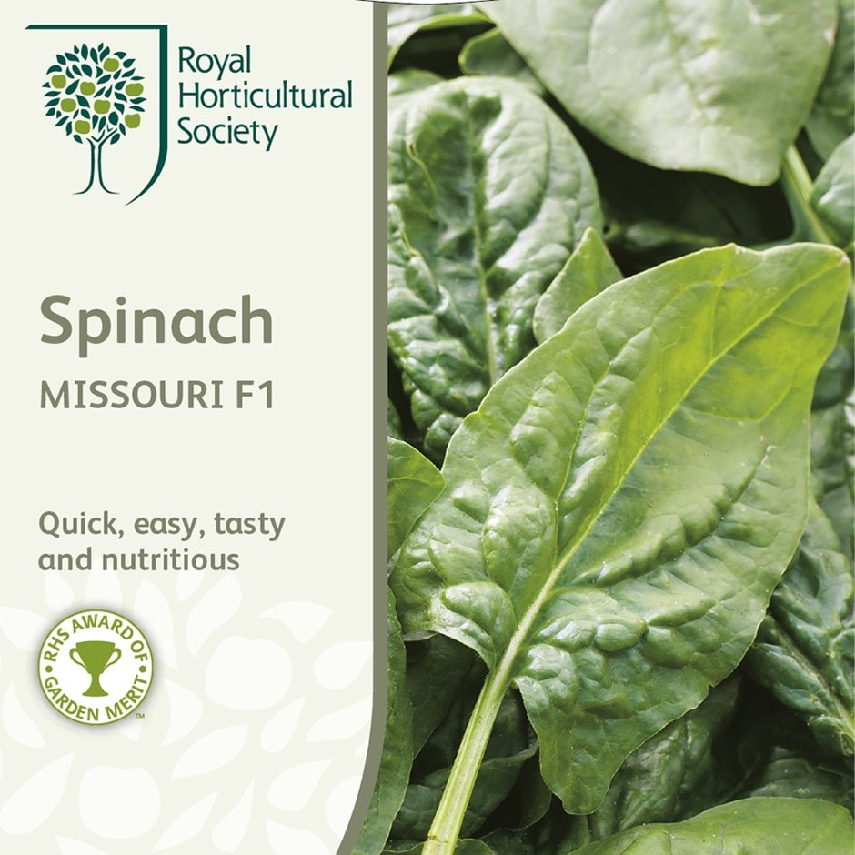 spinach / Spinacia oleracea 'Missouri' F1
