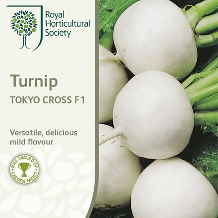 turnip Tokyo Cross