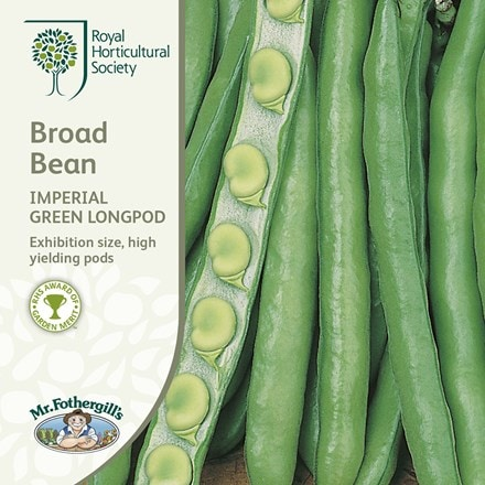 bean (broad) Imperial Green Longpod