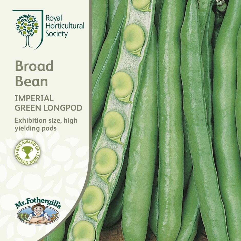 broad bean / Vicia faba 'Imperial Green Longpod'
