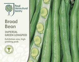 broad bean / Vicia faba 'Imperial Green Longpod'