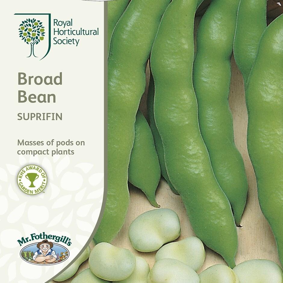 broad bean / Vicia faba 'Suprifin'