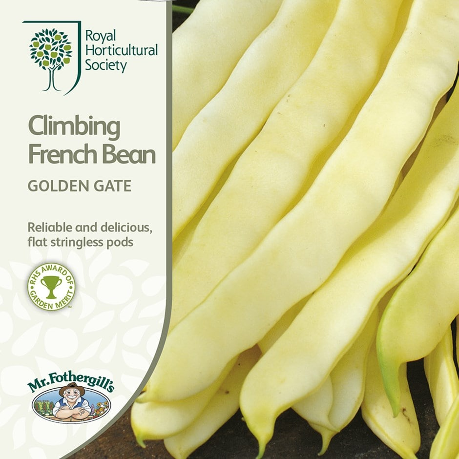 climbing french bean / Phaseolus vulgaris 'Golden Gate'