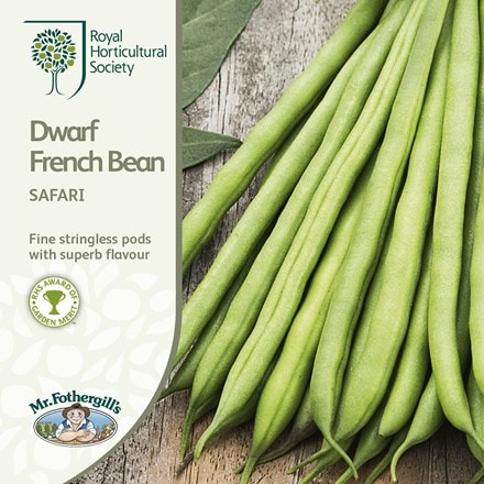 dwarf french bean Safari