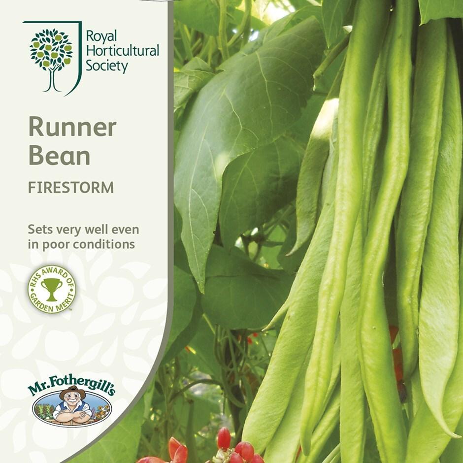 runner bean / Phaseolus coccineus 'Firestorm'