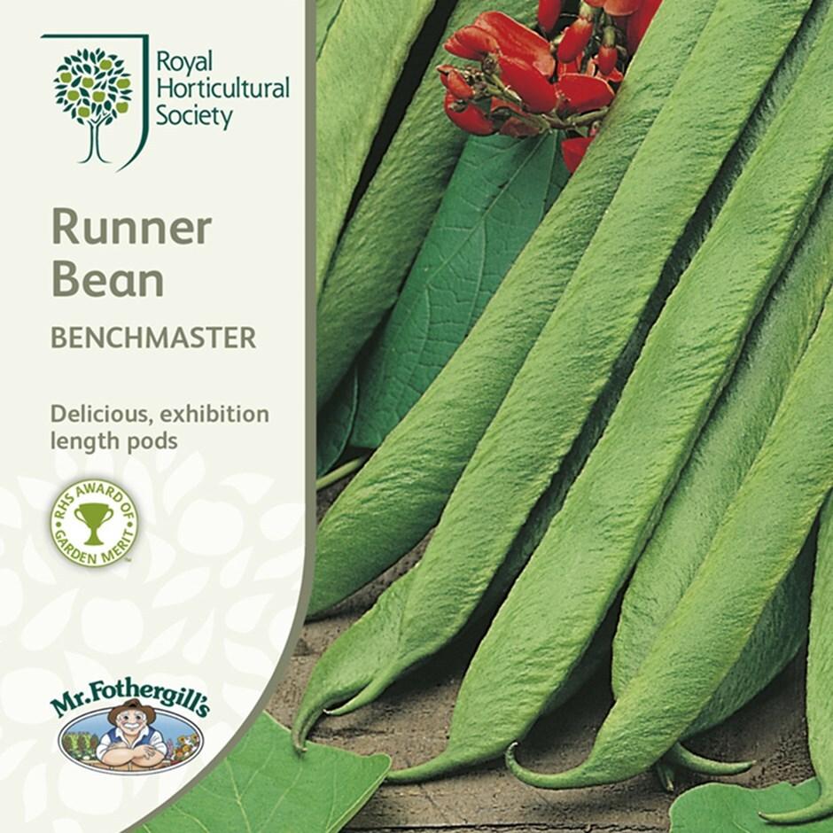 runner bean / Phaseolus coccineus  'Benchmaster'