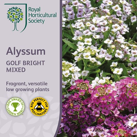 Alyssum Golf Bright Mixed