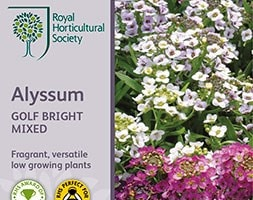 alyssum 'Golf Bright Mixed'