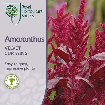 Amaranthus cruentus Velvet Curtains