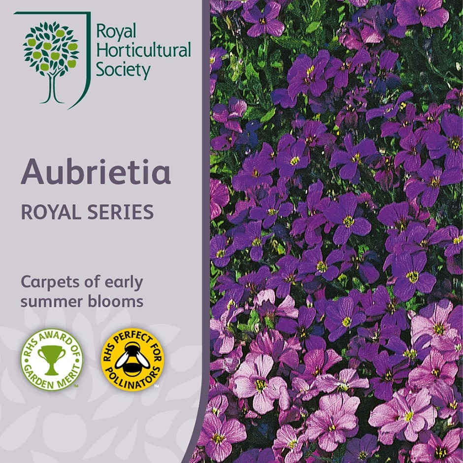 aubreitia Royal Series