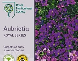 Aubrieta Royal Series