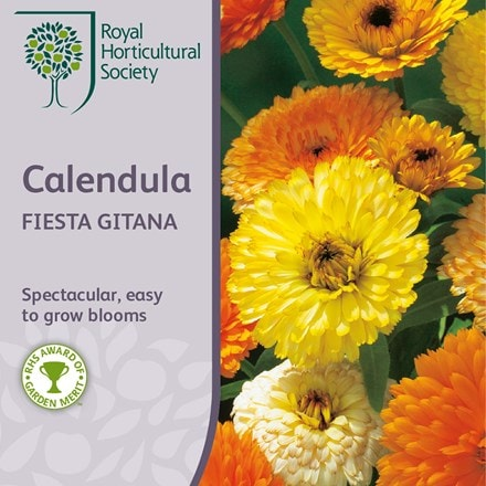 Calendula officinalis Fiesta Gitana Group