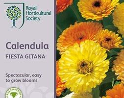 pot marigold Fiesta Gitana Group