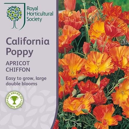 Eschscholzia californica Apricot Chiffon (Thai Silk Series)