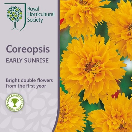 Coreopsis grandiflora Early Sunrise