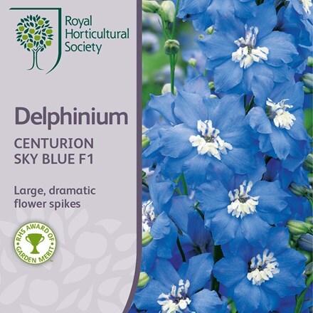 Delphinium Centurion Sky Blue (Centurion Series)