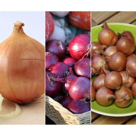 Award-winning onions and shallot collection