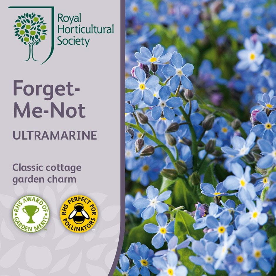 Ultramarine forget-me-not