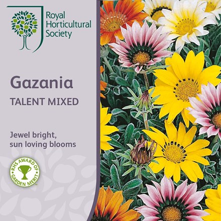 Gazania Talent Series