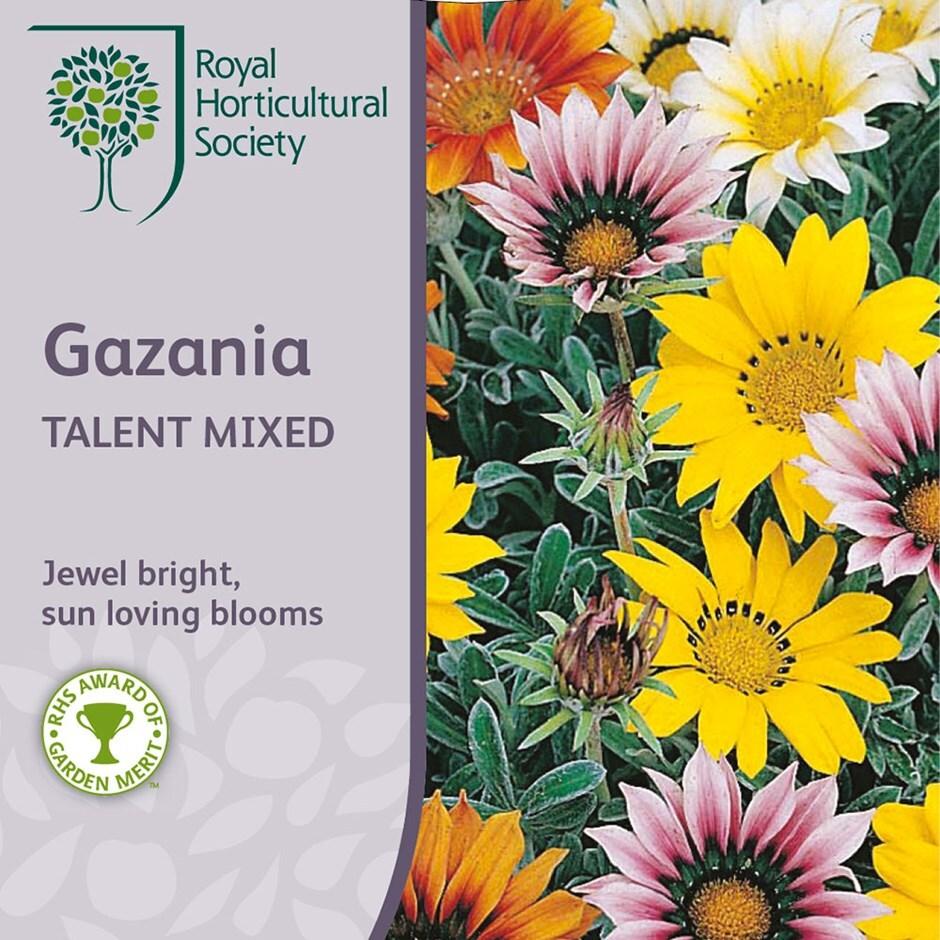 treasure flower Talent Series