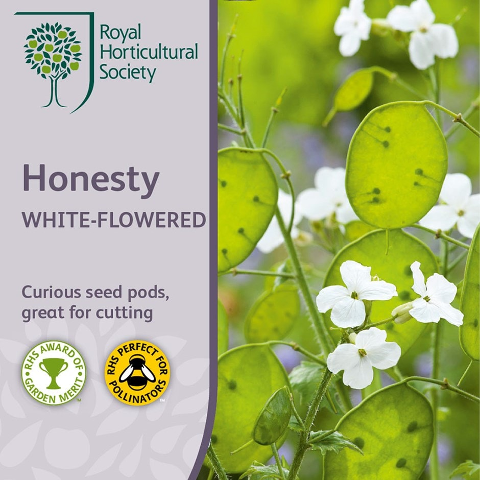 white annual honesty