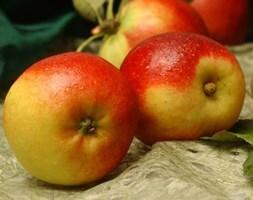 apple Ballerina Samba (Ballerina Series)