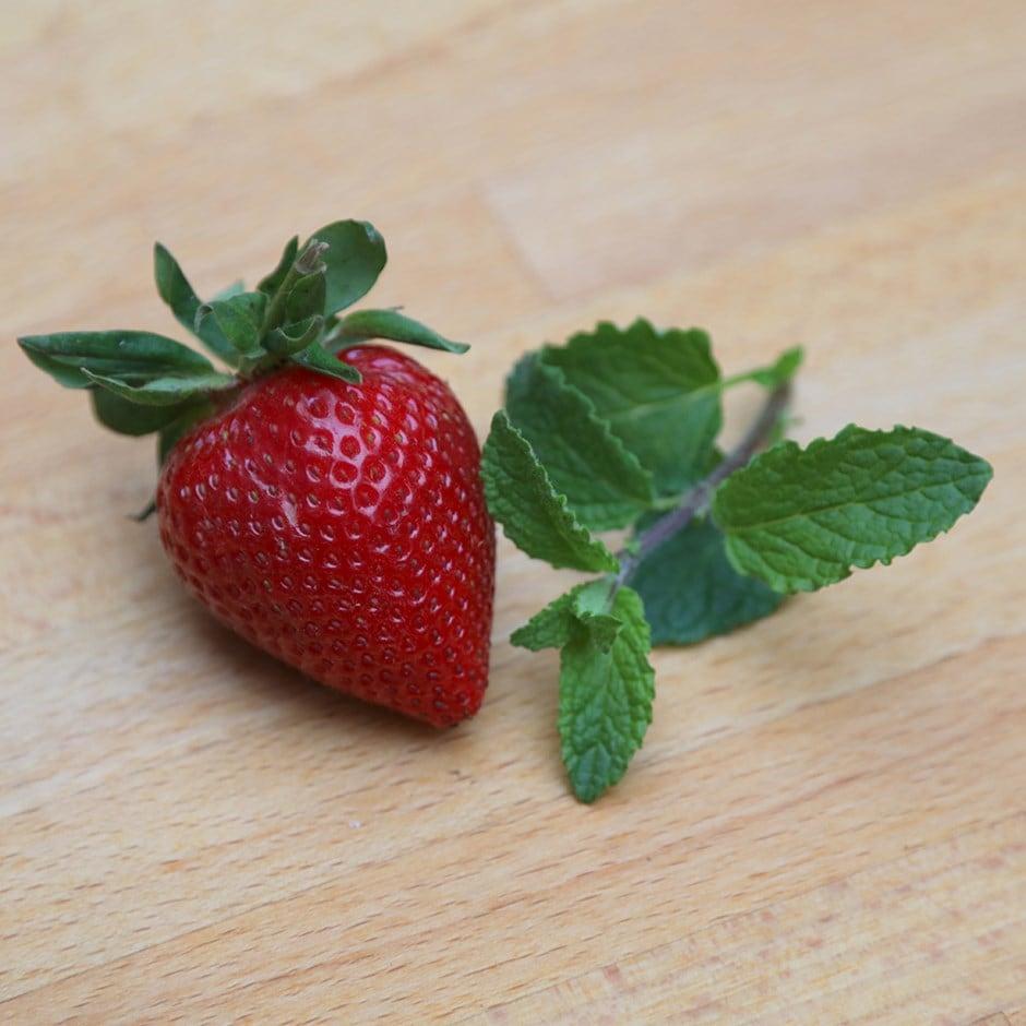 strawberry mint / Mentha × piperita 'Strawberry'