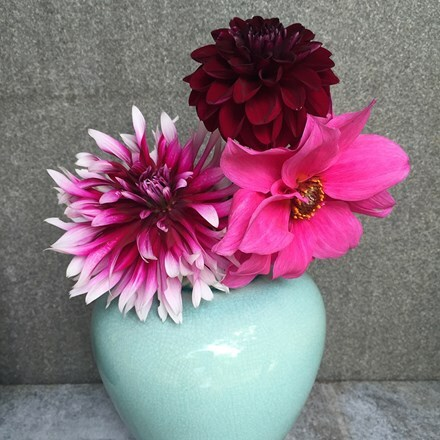 Jacobean dahlia collection