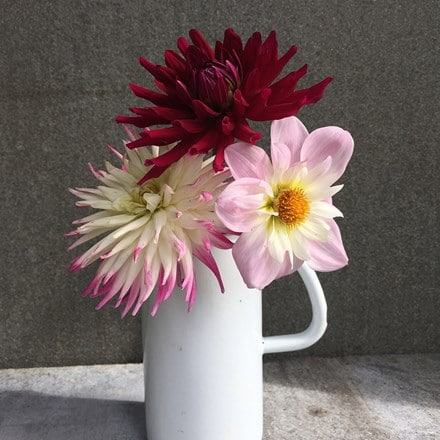 Pink and plum dahlia collection