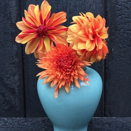 Fire opal dahlia collection