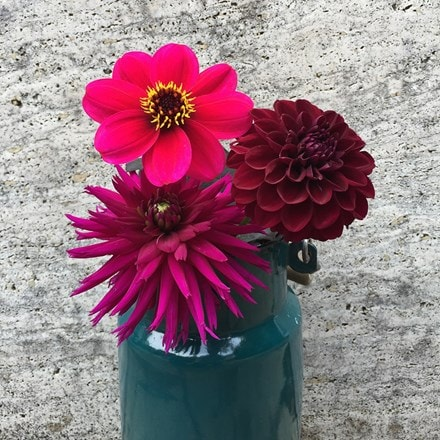 Plush dahlia collection