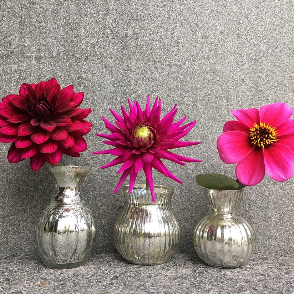 Ruby jewels dahlia collection  6+3 Free tubers