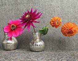 dahlia collection