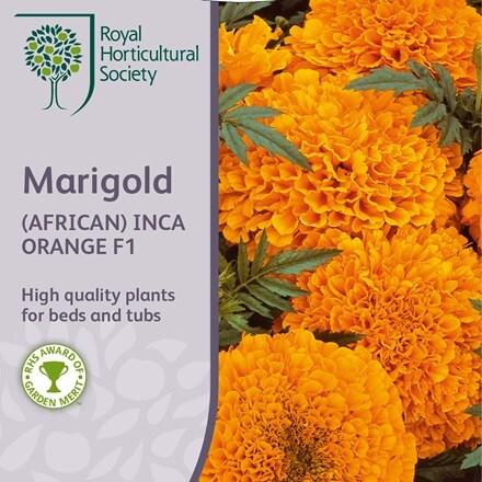Tagetes erecta Inca Orange (Inca Series)