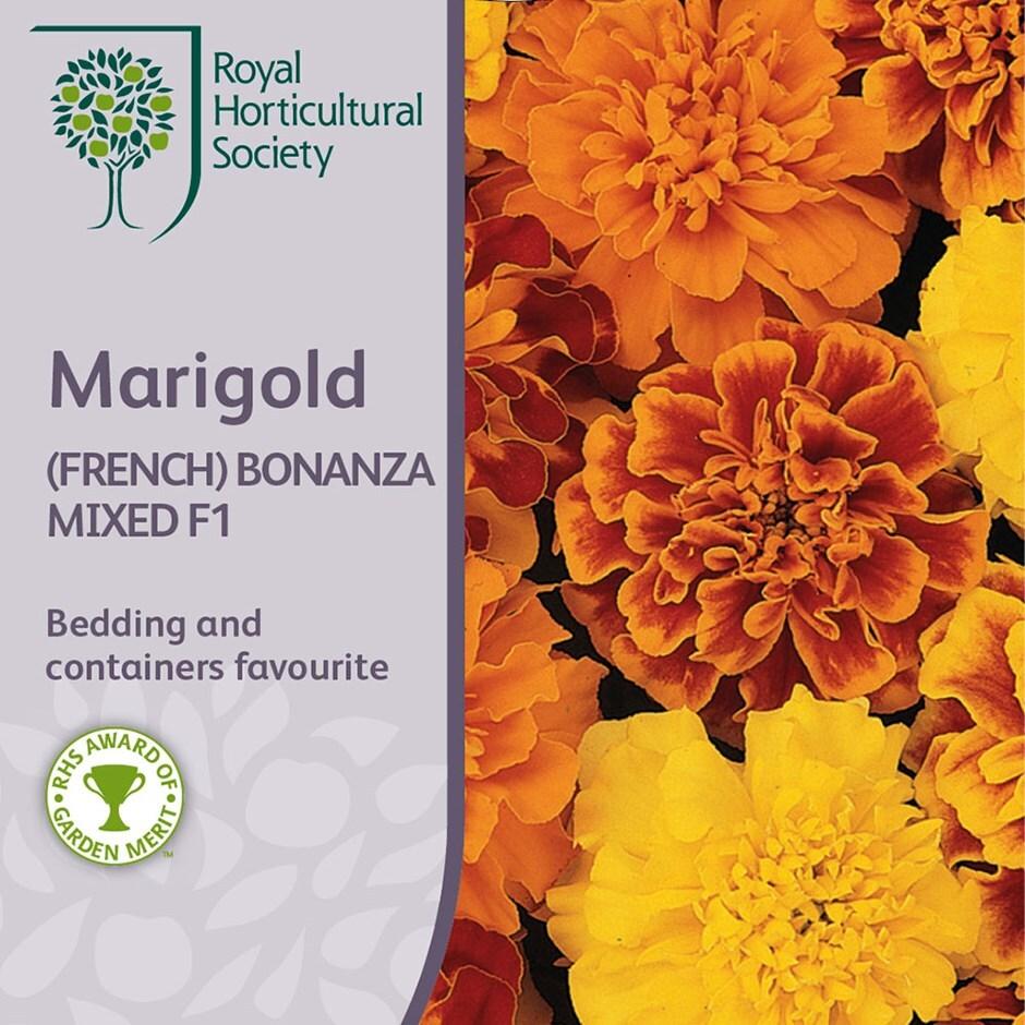 marigold Bonanza Series, mixed F1