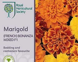 marigold Bonanza Series, mixed F1