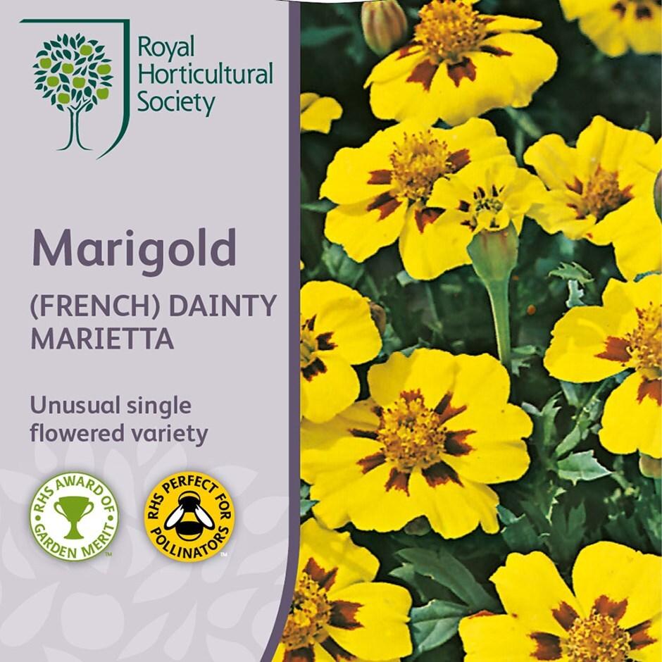 marigold 'Dainty Marietta'