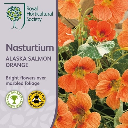 Tropaeolum majus Alaska Salmon Orange