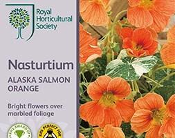 nasturtium 'Alaska Salmon Orange'