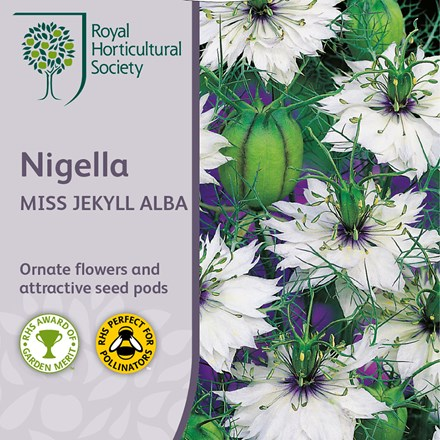 Nigella damascena Miss Jekyll Alba