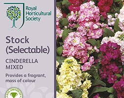 brompton stocks 'Cinderella Series, mixed'